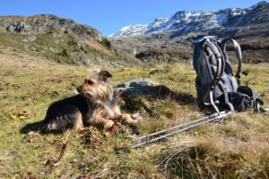 a dog sits next to a backpack with walking poles