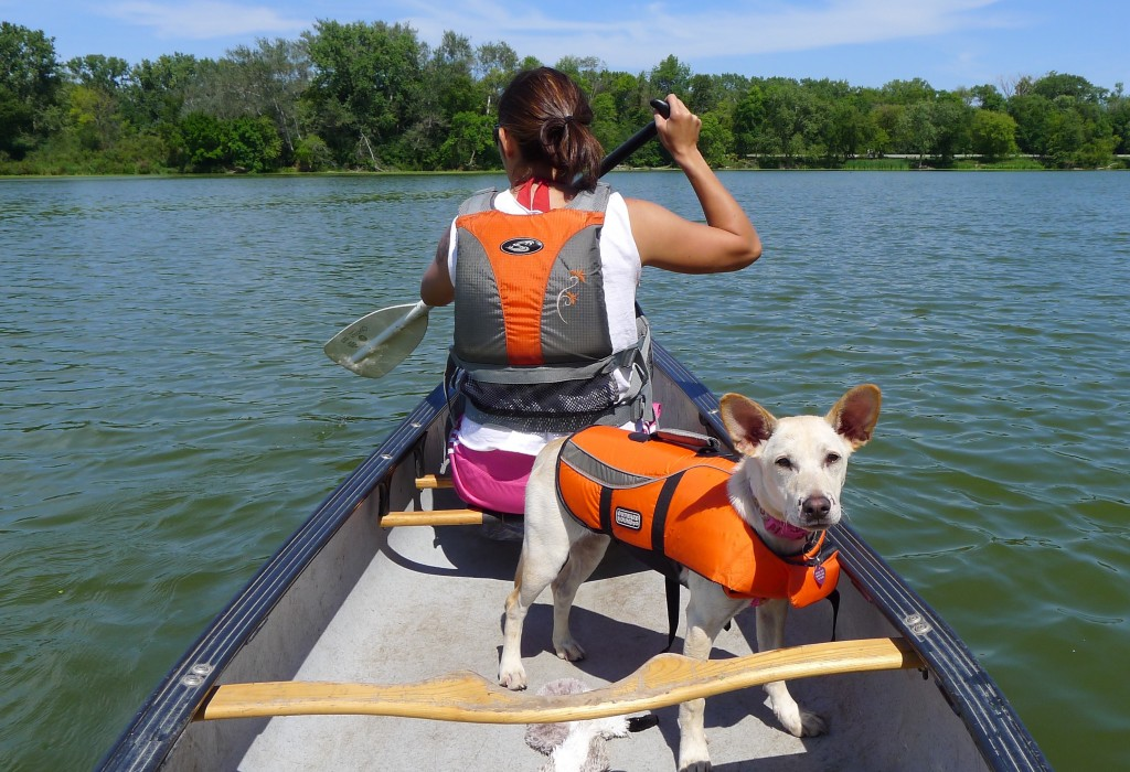 Dog Friendly State Parks Michigan