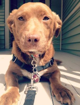 Summertime Ginger