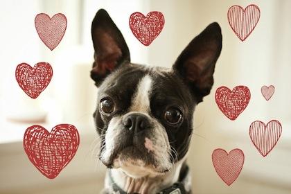 Iggy Love