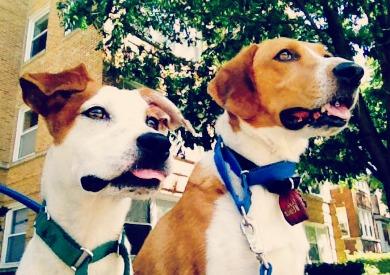 Stella and Beau!
