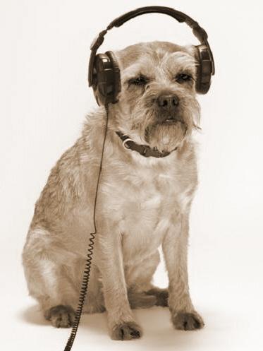 dog_wearing_headphones_sepia3